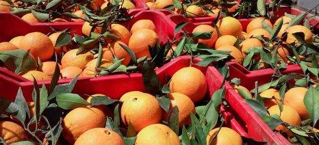 Εξαπατούν παραγωγούς πορτοκαλιών στην Αργολίδα χρησιμοποιώντας το όνομα εταιρείας από την Πέλλα