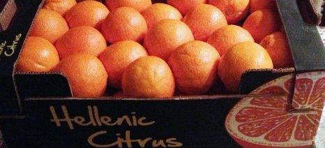 Για μείωση της παραγωγής ελληνικών πορτοκαλιών φέτος κάνει λόγο το USDA