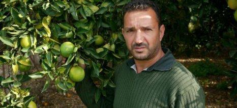 Μόνο με αναδιάρθρωση δενδρώνων θα έρθουν καλύτερες τιμές στα πορτοκάλια