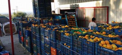 Τελευταία μέρα σήμερα για τα δικαιολογητικά της συνδεδεμένης στο πορτοκάλι από τους μεταποιητές