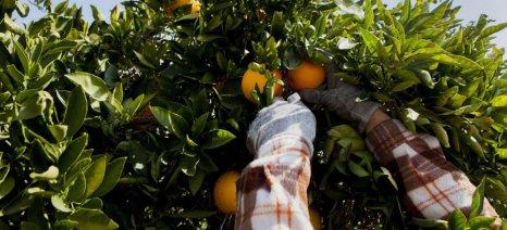 Πώς κατοχυρώνεις δικαίωμα για συνδεδεμένη ενίσχυση στα πορτοκάλια για χυμό