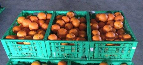 Κατάσχεση 1,5 τόνου πορτοκαλιών στη λαχαναγορά του Ρέντη για παράτυπη σήμανση