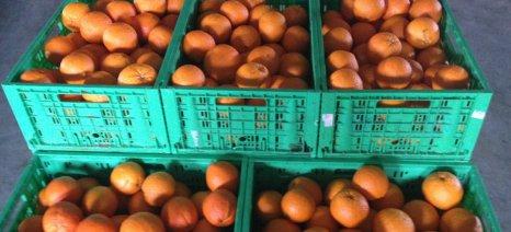 Κλοπή 3,5 τόνων πορτοκαλιού στην Αργολίδα
