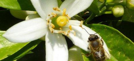 Ανοιξιάτικοι ψεκασμοί στα εσπεριδοειδή της Αργολίδας με έμφαση στην προστασία των μελισσών