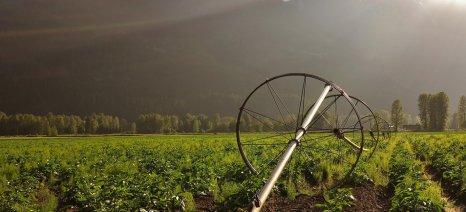 Οι βροχές των τελευταίων ημερών ευνόησαν τον περονόσπορο στις πατάτες της Πρέβεζας