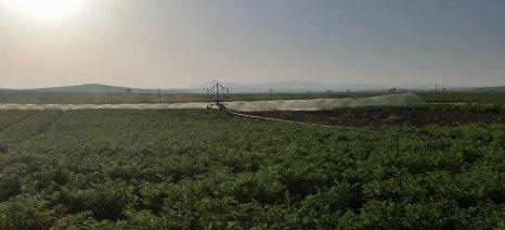 Μόνο το 6,7% των αγροτών εισέπραξε πάνω από 10.000 ευρώ ενισχύσεις το 2013