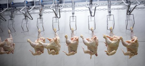 Κατά 0,9% μειώθηκαν οι τιμές στο κρέας κοτόπουλου στην Ε.Ε. σε σχέση με το 2014