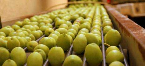 Στην ίδρυση ομάδας παραγωγών ελιάς προχωρά ο Α.Σ. «Ένωση Αγρινίου»
