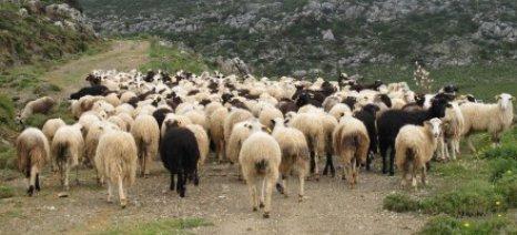 Στα 9,1 εκατ. ευρώ οι de minimis των αιγοπροβατοτρόφων της Κρήτης