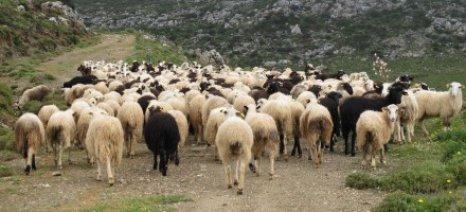 Αναρτήθηκαν οι προσωρινοί πίνακες κατάταξης των δικαιούχων της Βιολογικής Κτηνοτροφίας