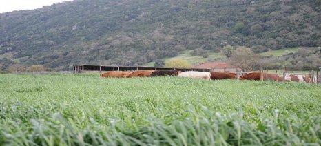 Ενισχύονται πρόχειρες σταβλικές εγκαταστάσεις και φωτοβολταϊκά μετακινούμενων κτηνοτρόφων της Ηπείρου
