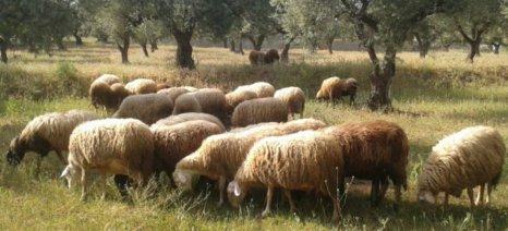 Κομοτηνή: Στα θρανία οι κτηνοτρόφοι
