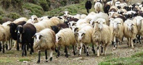 Καμπανάκι για το μέλλον της κτηνοτροφίας από εκπροσώπους του κλάδου σήμερα στο ΥΠΑΑΤ