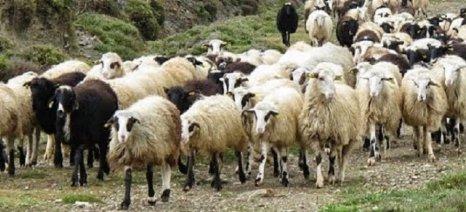Πάνω από ένα εκατ. ευρώ σε κτηνοτρόφους για την εξυγίανση του ζωικού κεφαλαίου