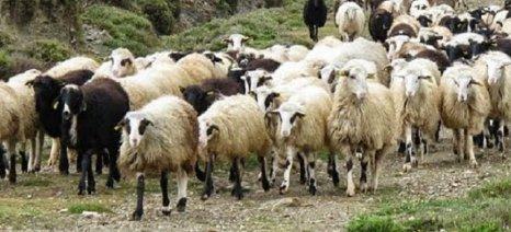 Αναλυτικά μέτρα στήριξης της κτηνοτροφίας με έμφαση στην αιγοπροβατοτροφία από τον ΣΕΚ