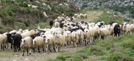 Ανακοινώθηκαν οι δικαιούχοι Βιολογικής Κτηνοτροφίας έτους 2013 στην Καβάλα - ενστάσεις έως 8/8