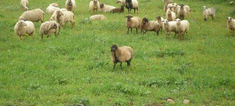 Λάρισα-Κατάσταση πληρωμής για: «Διατήρηση απειλούμενων φυλών αγροτικών ζώων»