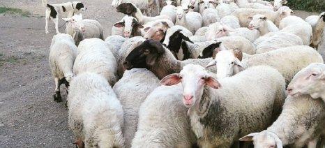 Διαψεύδονται τα σενάρια για ευρωπαϊκό πρόγραμμα απόσυρσης των κτηνοτρόφων από το επάγγελμα