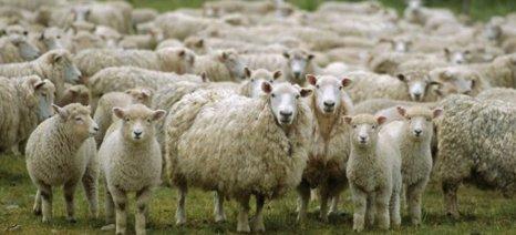 Πληρώθηκαν οι de minimis ενισχύσεις των αιγοπροβατοτρόφων