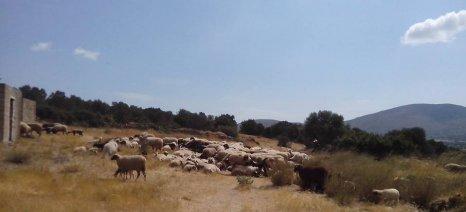 Σύσκεψη στην Αθήνα για την ευλογιά σήμερα, με Αποστόλου και Πάλλη