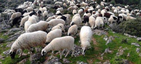 Αναρτήθηκαν οι καταστάσεις πληρωμής βιολογικής κτηνοτροφίας 2015 για Λέσβο και Λήμνο