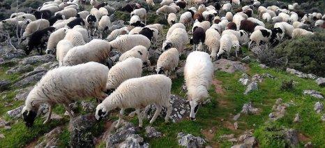Επανέκαμψαν οι ζωοκτονίες στην Κρήτη
