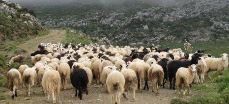 Χάος με τις ενισχύσεις των κτηνοτρόφων στην ορεινή Ξάνθη: Περίμενε 4.800 και πήρε 3 ευρώ!