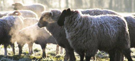 Με 529 ψήφους οι ευρωβουλευτές ψήφισαν την απαγόρευση εκτροφής κλωνοποιημένων ζώων