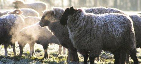 Βρετανοί αναλυτές κάνουν έκκληση για μείωση της χρήσης των αντιβιοτικών στην κτηνοτροφία
