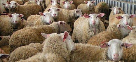 Τρία βήματα για την πρόληψη του καταρροϊκού στη φάρμα - Τα 7 συμπτώματα στα ζώα