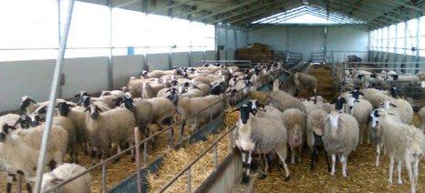 Στο δρόμο της… «ανάνηψης» της κτηνοτροφίας στη Λέσβο
