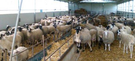 Το ΤΕΙ Ηπείρου ανέλαβε τη μελέτη για τη διάρθρωση της κτηνοτροφίας με σύμβαση από την Περιφέρεια