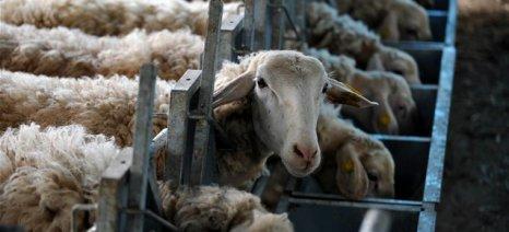 «Κιβωτός»: 30 κτηνοτρόφοι έφτιαξαν συνεταιρισμό στα Γιαννιτσά