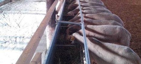 Οδηγίες για τη σωστή διατροφή των αιγοπροβάτων
