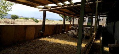Σε ένα μήνα λήγει η προθεσμία για την αδειοδότηση κτηνοτροφικών μονάδων