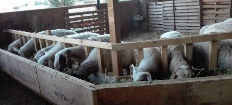 Εκπαιδευτική ημερίδα για τους κτηνοτρόφους του Αμυνταίου με θέμα: «Σιτηρέσιο μικρών αιγοπροβάτων»