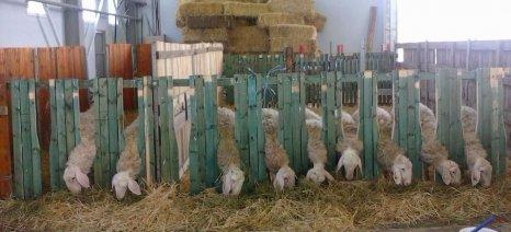 Πιστώσεις 1,6 εκατ. ευρώ για εμβόλια και παγίδες εντόμων κατά των ζωονόσων