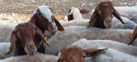 Με υδροφόρες νερό στους κτηνοτρόφους του δήμου Ιωαννιτών
