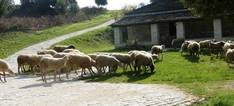 Στα 6,2 ευρώ ανά επιλέξιμο ζώο η συνδεδεμένη ενίσχυση για το αιγοπρόβειο κρέας