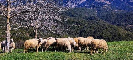 Στήριξη των κτηνοτρόφων των ορεινών δήμων Αργιθέας, Αγράφων και Καραϊσκάκη ζητούν οι δήμαρχοί τους