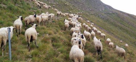 Έως 31 Μαρτίου οι δηλώσεις εισαγωγής ζώων στους βοσκοτόπους του δήμου Ξηρομέρου