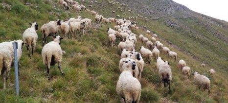 """Πώς θα επισπευθούν οι de minimis στους κτηνοτρόφους προτείνει ο Κασίμης και ο Βορίδης του λέει """"καλύτερα να σωπάσει"""""""