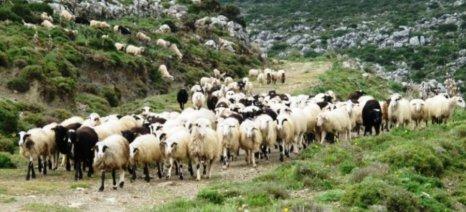 Εκτός εξισωτικής οι κτηνοτρόφοι με συντάξεις χηρείας και αναπηρίας