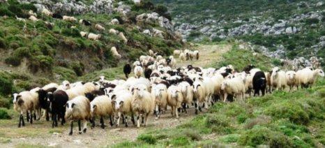 Πρόσθετα μέτρα για την αιγοπροβατοτροφία ζητά ο Βαγγέλης Αποστόλου