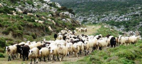 Με τρείς κλίμακες οι de minimis ενισχύσεις στους αιγοπροβατοτρόφους της Κρήτης