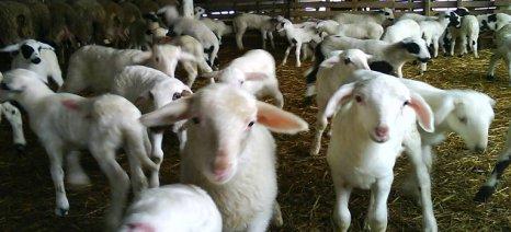 Ημερίδα στον Άγιο Μάμα Χαλκιδικής για τις προοπτικές της κτηνοτροφίας