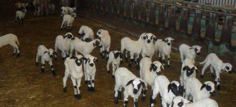 """Σκάνδαλο και όχι """"κοινό μυστικό"""" χαρακτηρίζουν τις αθρόες εισαγωγές αιγοπρόβειου γάλακτος οι κτηνίατροι της Ηπείρου"""