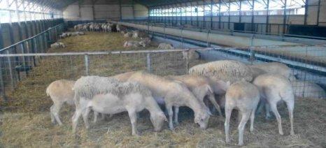 Διαγωνισμός για κατασκευή επιδεικτικού προβατοστασίου στη Λήμνο