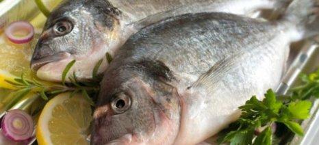 Τα ψάρια στη διατροφή μειώνουν τον κίνδυνο της κατάθλιψης