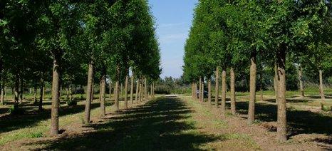 Στην αναμονή για την πληρωμή οι δικαιούχοι δάσωσης γεωργικών γαιών